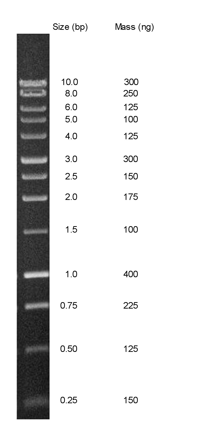 Chimerx Perfect Plus 1 Kb DNA Ladder