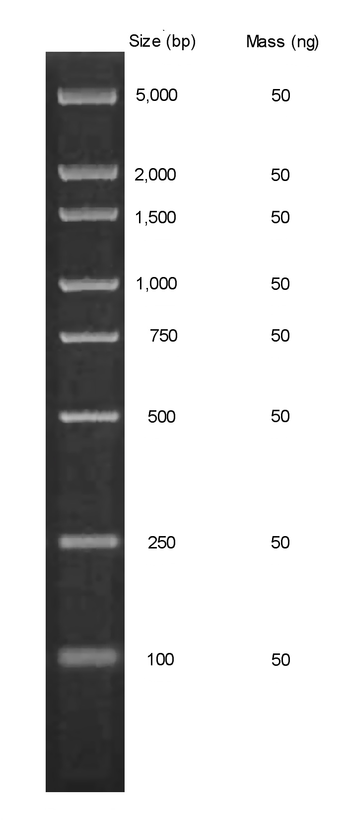Chimerx Perfect Plus Molecular Weight DNA Ladder